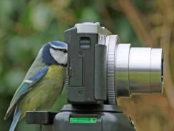 Meilleure caméra de chasse 2020