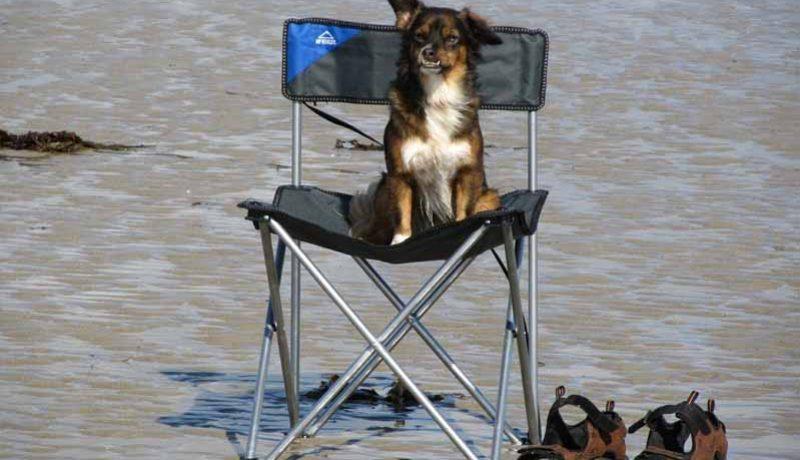Meilleure chaise de camping 2020